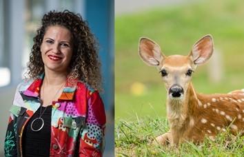 Rima Azar, PhD, Personal Website